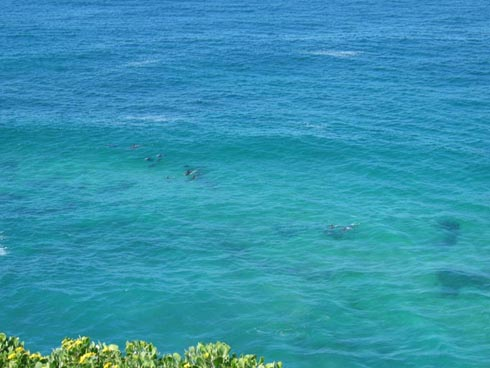br2004/images/day6dolphins.jpg